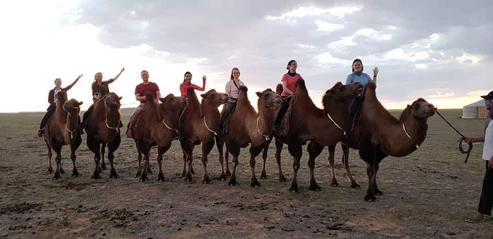 Wirtschaftsjunioren Karlsruhe reiten Kamele beim Mongolei Twinning